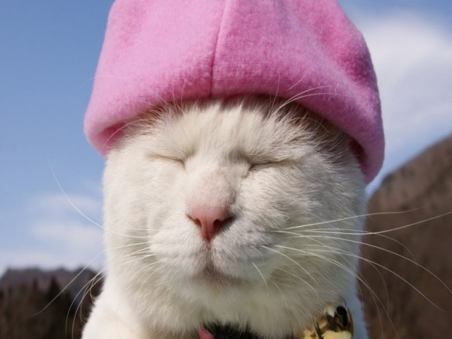 14 cap funny cat photography
