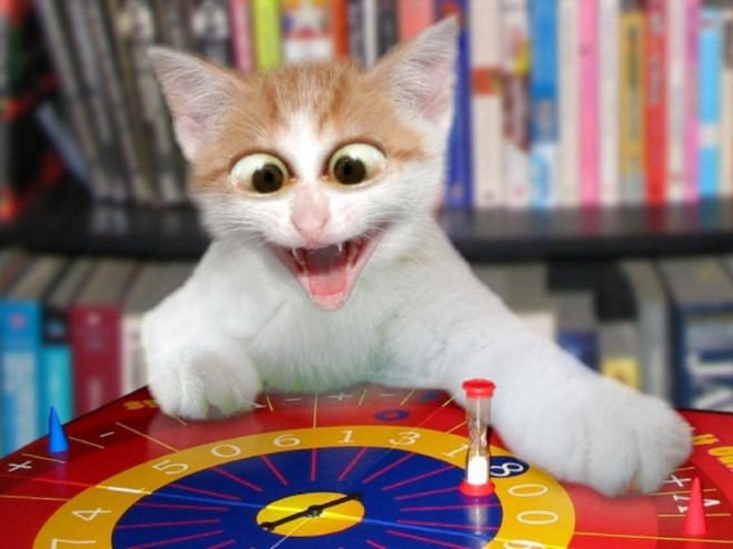 15 game funny cat photography