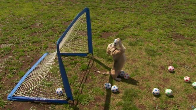 soccer beagle funny guinness world records
