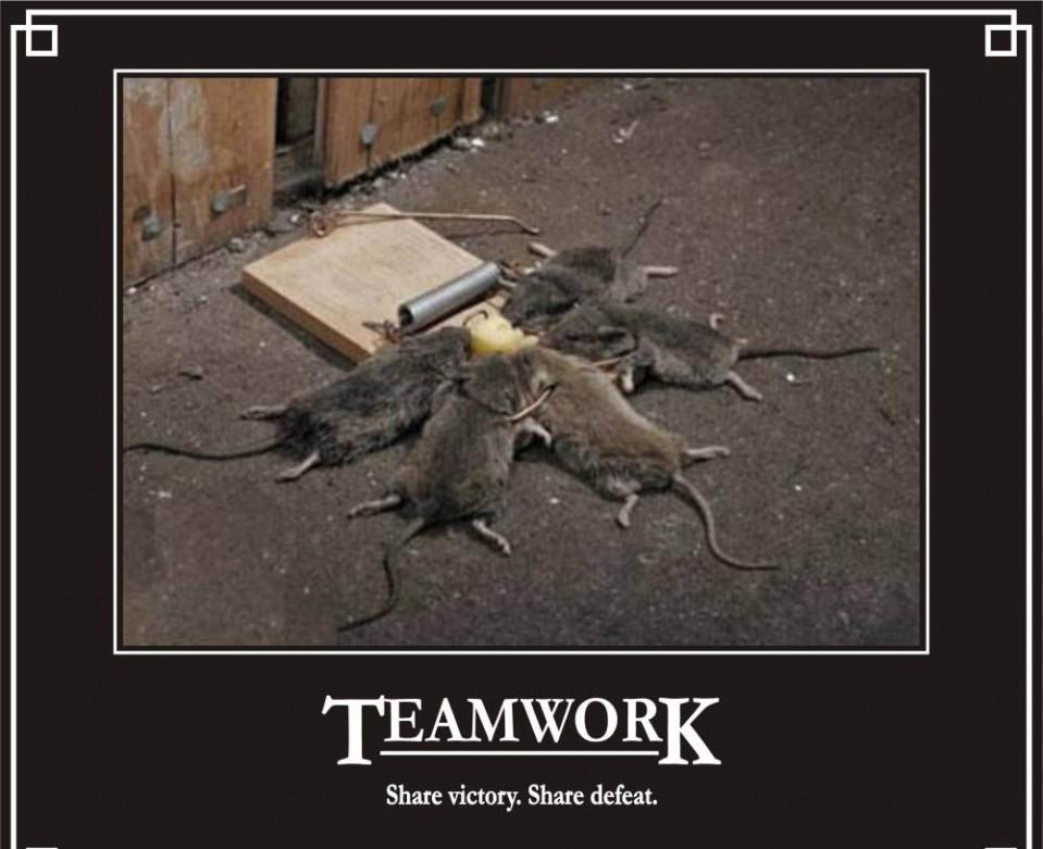 rat funny poster