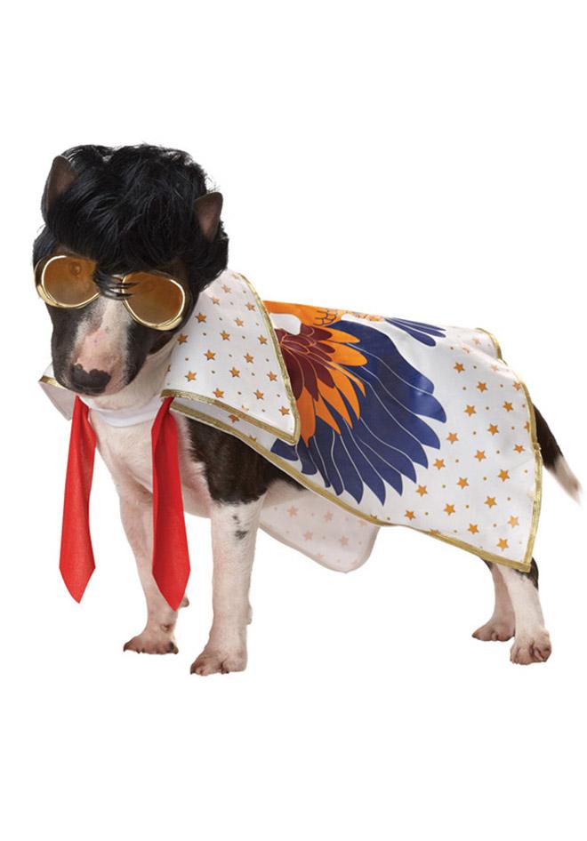 rockstar funny dog costume