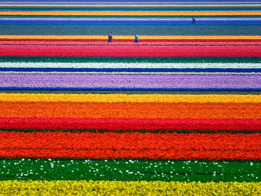 17 tulip fields photography