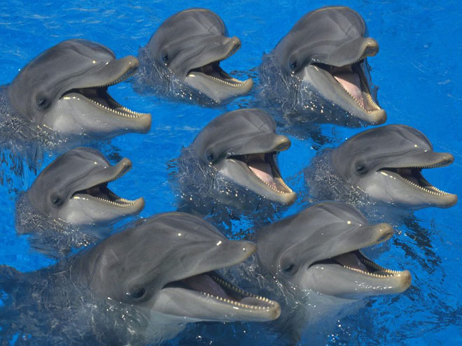 funny dolphin happy animal picture