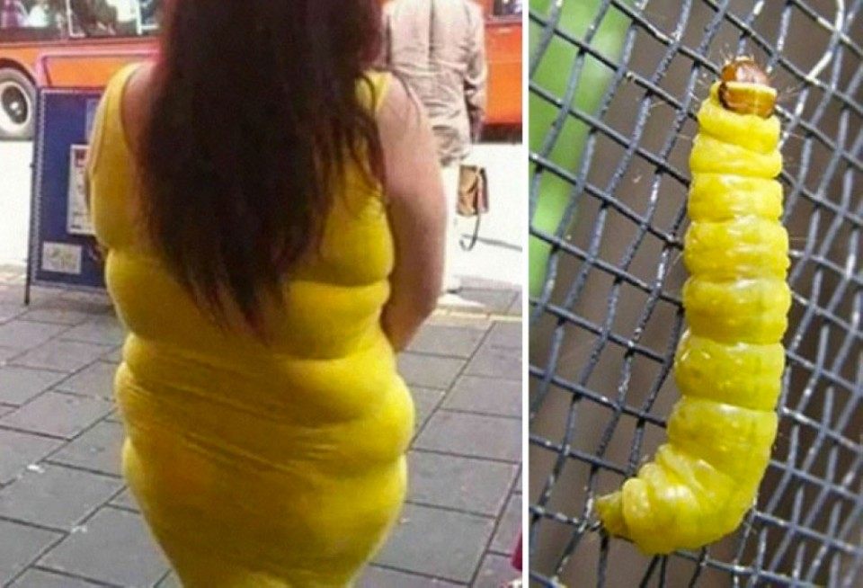 18 yellow dress and caterpillar similar funny photography