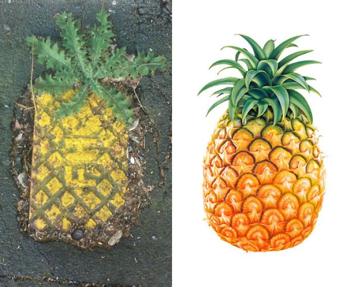 street grate or majestic urban pineapple funny similar things photography