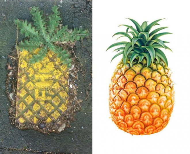 19 street grate or majestic urban pineapple funny similar things photography