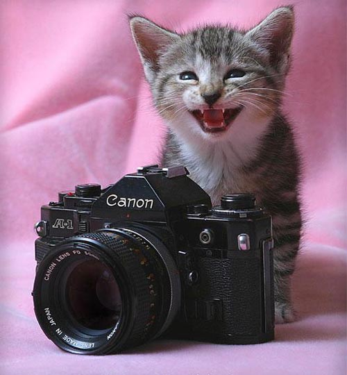 2 camera funny cat photography