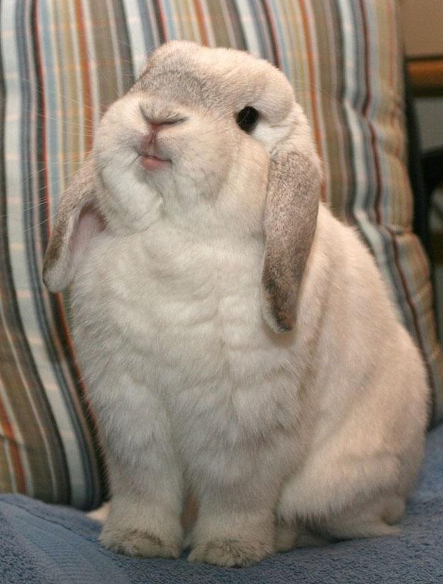 rabbit happy animal