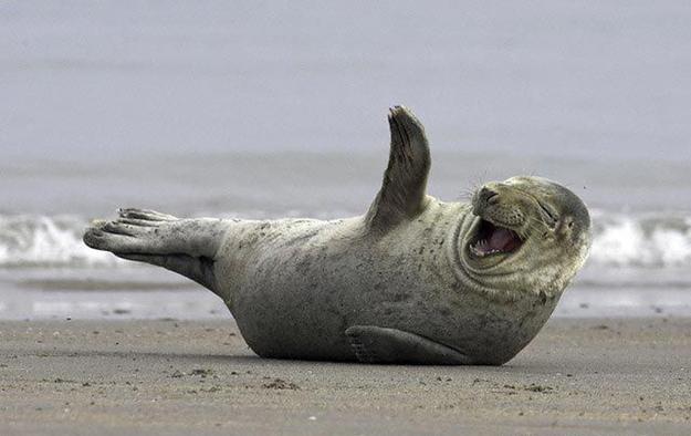 seal happy animal