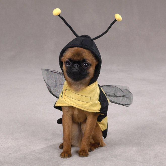 bee funny dog costume -  24