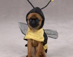 24-bee-funny-dog-costume