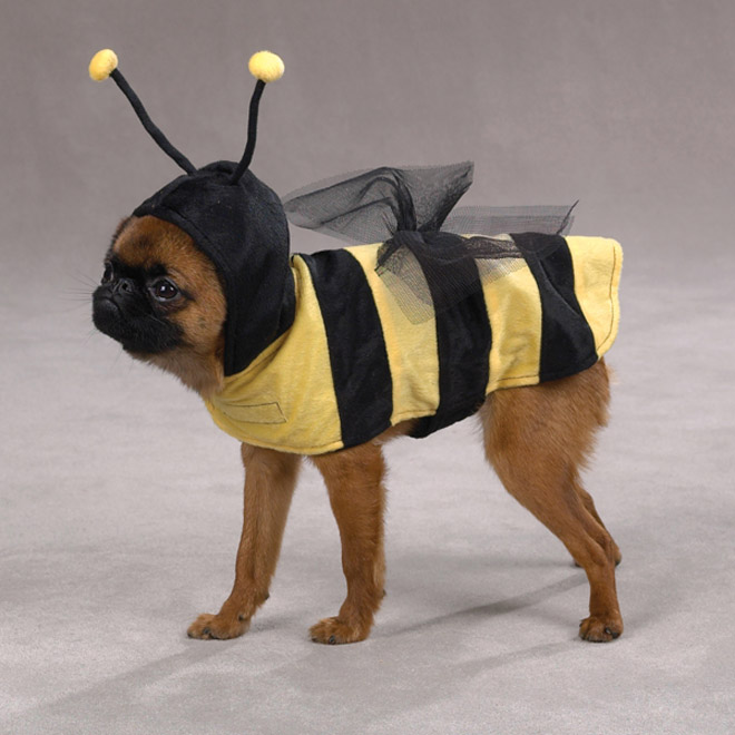 25 bee funny dog costume