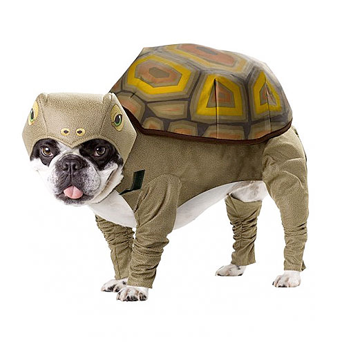 tortoise funny dog costume