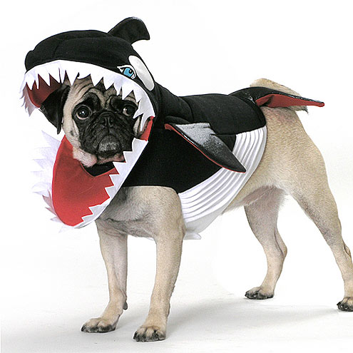 28 shark funny dog costume