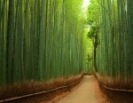 3 bamboo forest photography