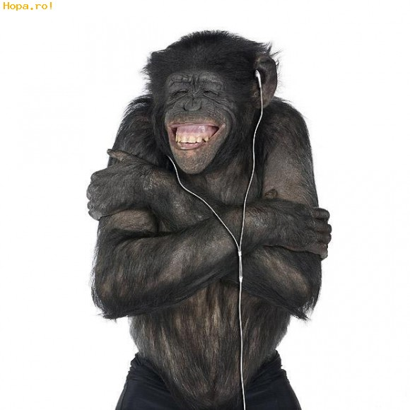 chimp happy animal -  3