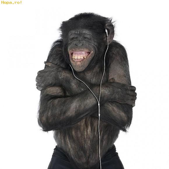 chimp happy animal