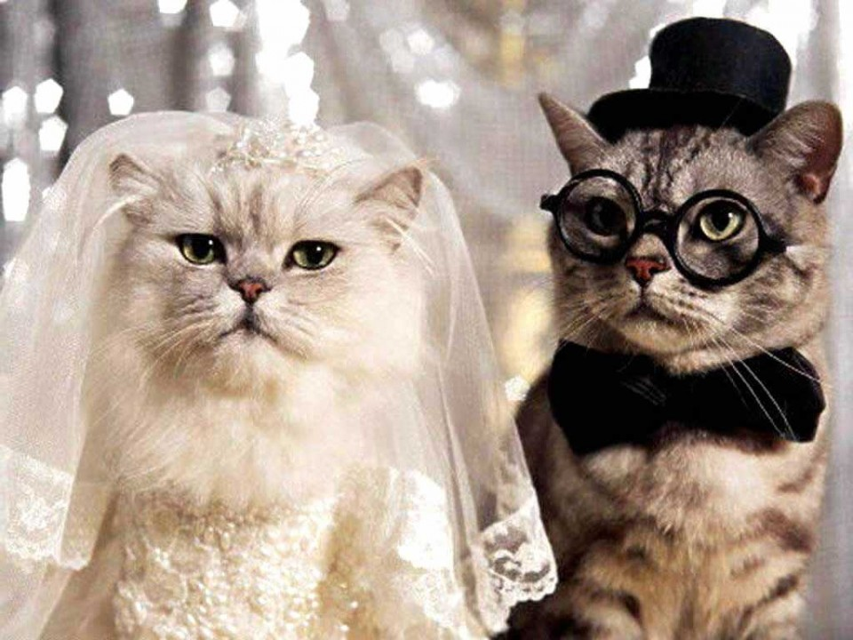 marriage couple funny cat photography