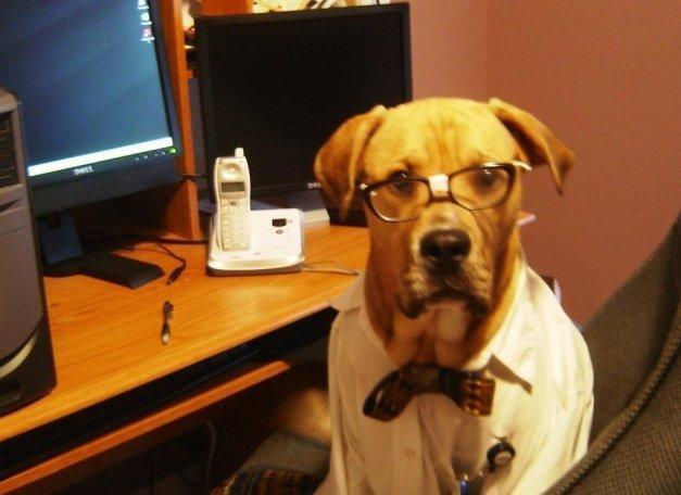 nerd funny dog costume