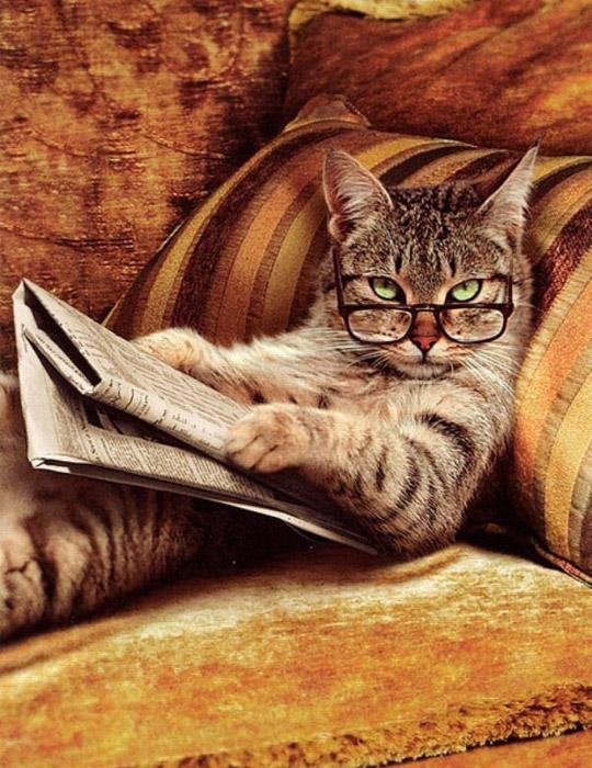 news paper funny cat photography