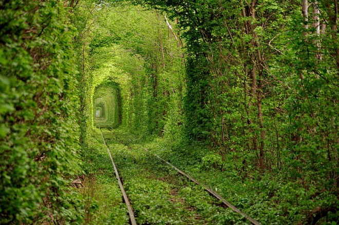 amazing picture tunnel of love