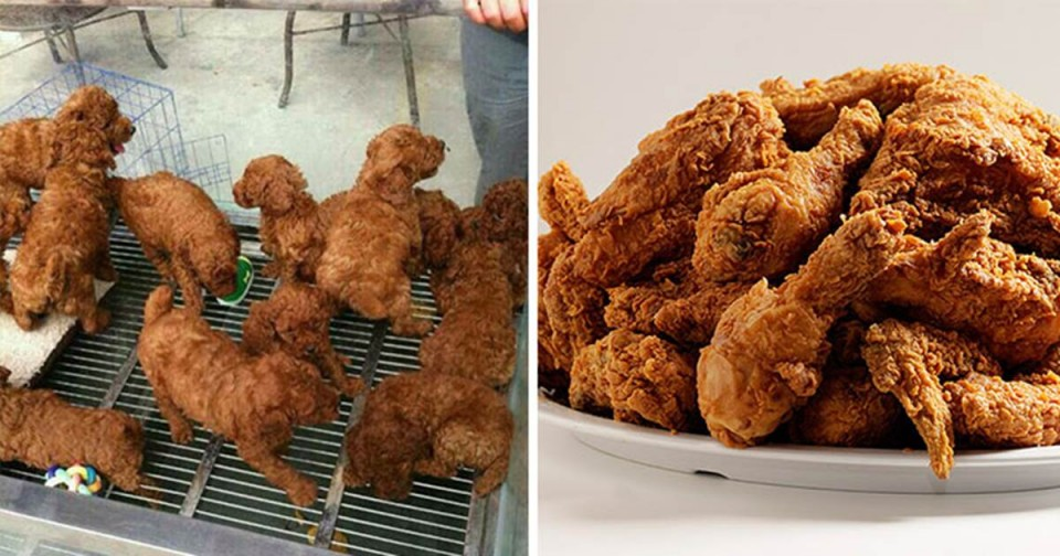 7 puppies look like fried chicken similar funny photography
