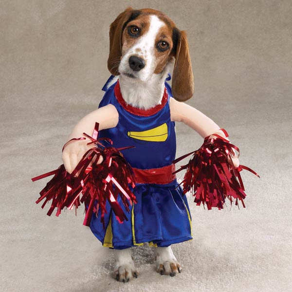 8 cheerleader funny dog costume