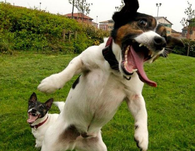 dog happy animal
