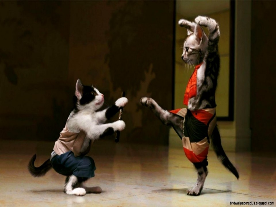 fighting funny cats photography