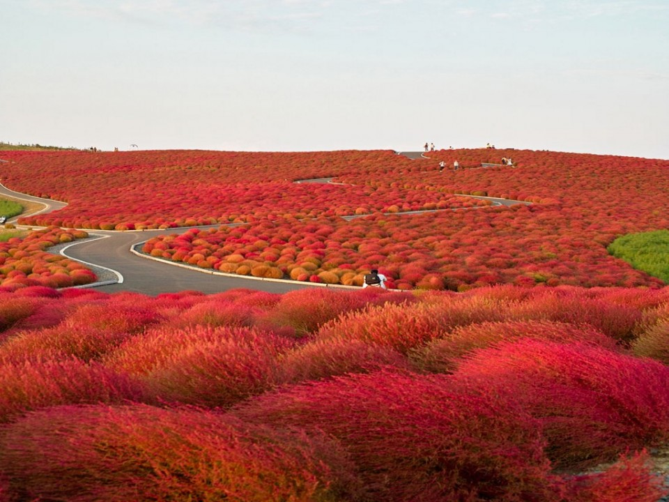 8 hitachi seaside park photography