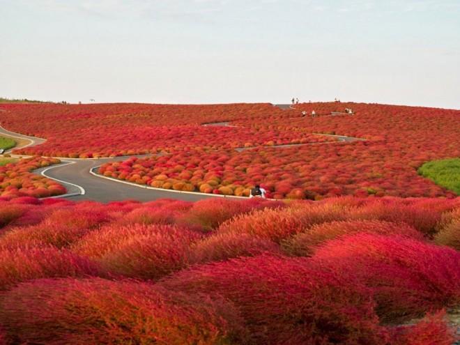 hitachi seaside park photography