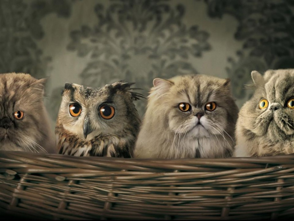 8 owl blending in with persian cats funny similar things photography