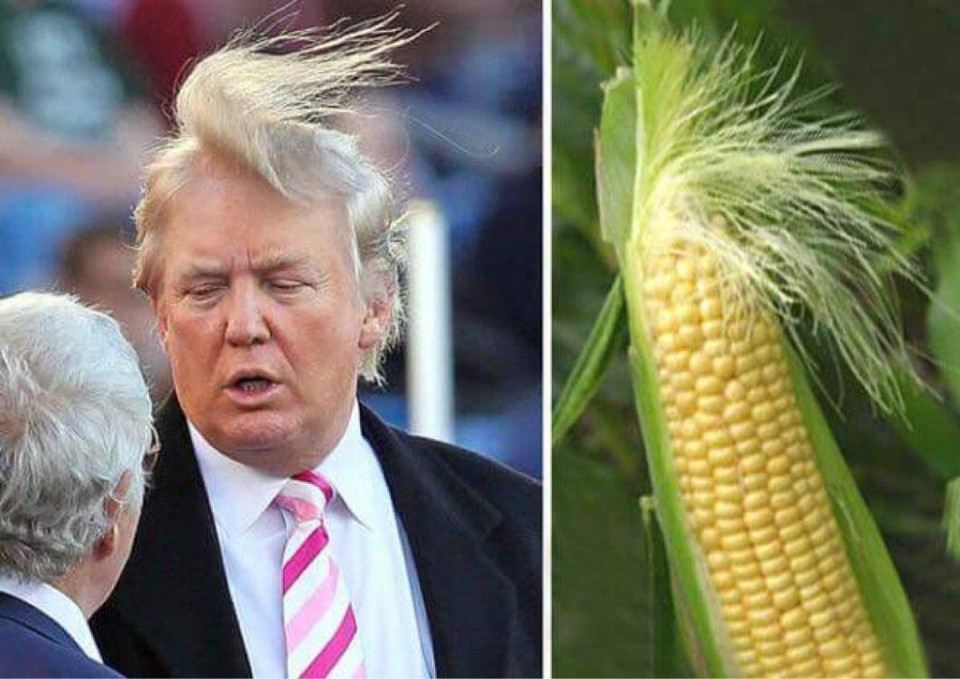 8 similar funny photography