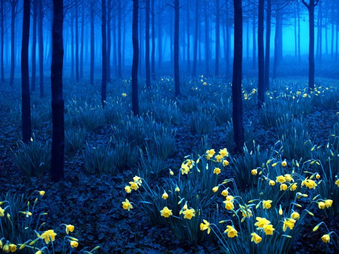 9 black forest photography