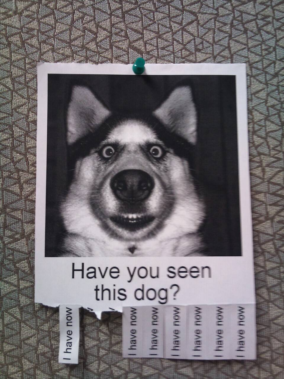 dog funny poster
