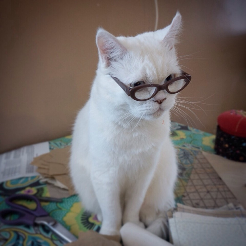 9 spectacles funny cat photography