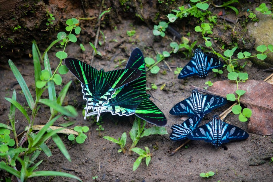 beautiful butterfly pictures metallic color by phil torres