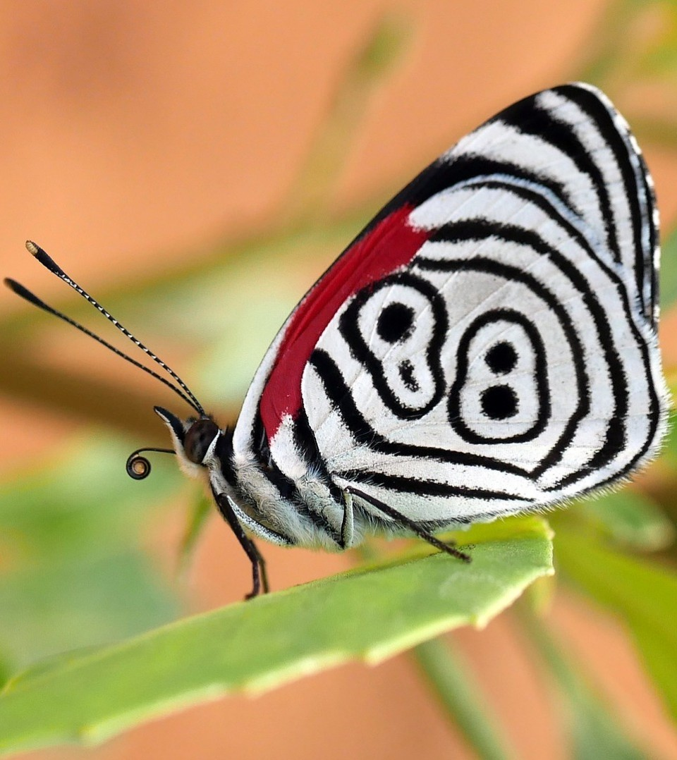 beautiful butterfly picture 88