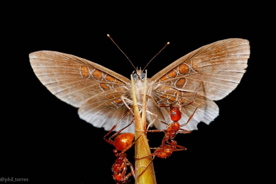 beautiful butterfly pictures jungle laws ant by phil torres