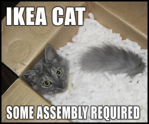 cat fail funny