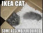 cat-fail-funny