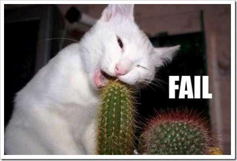 cat funny fail