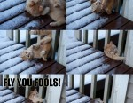 cat-slipping-funny-fail