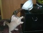 fail-funny-cat