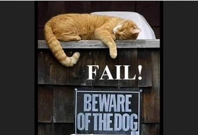funny animal cat fail