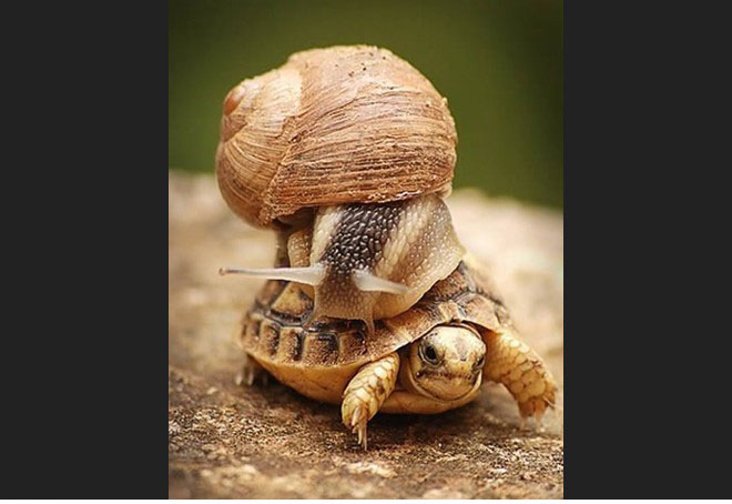 funny animal snail fail