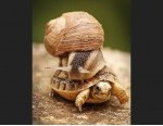 funny-animal-snail-fail