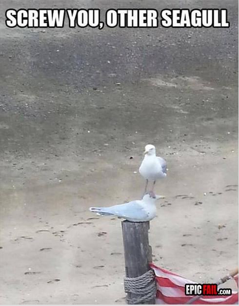 funny seagull fail