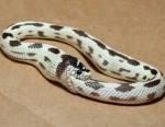 funny-snake-fail