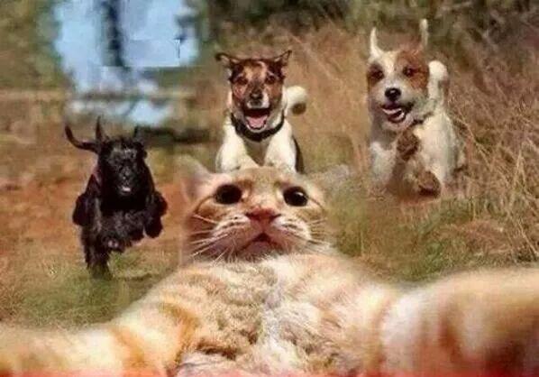 funny animals cat selfie